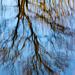 20140310 0842VRAw [D-E] Spiegelung, Gruga-Park, Essen