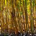 20140310 0840VRAw [D-E] Bambus, Gruga-Park, Essen