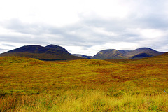 Wavy Land