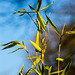 20140310 0835VRAw [D-E] Bambus, Gruga-Park, Essen