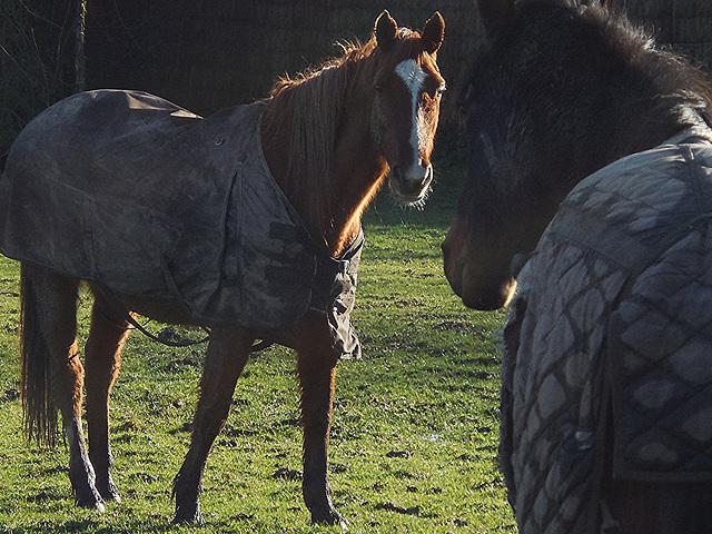 un cheval peut en cacher un autre