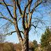 20140310 0832VRAw [D-E] Baum, Gruga-Park, Essen