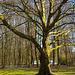 20140310 0830VRAw [D-E] Baum, Gruga-Park, Essen