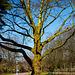 20140310 0829VRAw [D-E] Baum, Gruga-Park, Essen