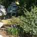 japanische Steinlampe in deutschem Garten