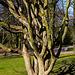 20140310 0828VRAw [D-E] Baum, Gruga-Park, Essen