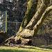 20140310 0822VRAw [D-E] Baum, Gruga-Park, Essen