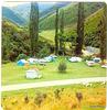 The poplars Te Moana Gorge