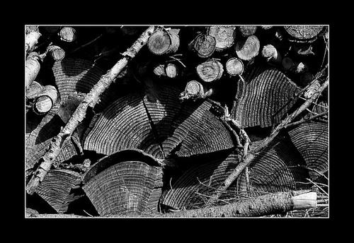 Texture végétale