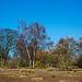 20140310 0770VRAw [D-E] Gruga-Park, Bäume-