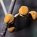 20140310 0752VRAw [D-E] Blauglockenbaum, (Paulownia tomentosa), Knospen, Gruga-Park, Essen