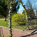 20140310 0739VRAw [D-E] Hainbuche, Gruga-Park, Essen