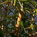 20140310 0715VRAw [D-E] Bambus, Gruga-Park, Essen