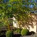 20140310 0711VRAw [D-E] Bambus, Gruga-Park, Essen
