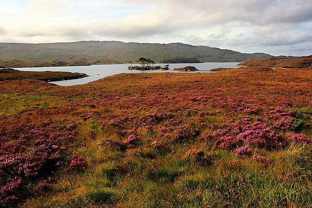 Loch Assynt - Torr an Eilein 1