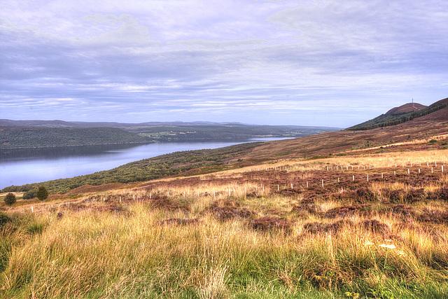 Dornoch Firth 1