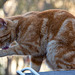 20140304 0506VRAw [TR] Katze, Mustafa Pasa, Kappadokien, Türkei