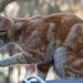 20140304 0505VRAw [TR] Katze, Mustafa Pasa, Kappadokien, Türkei