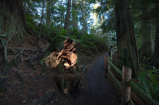 Strange light along the path