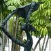 Sculpture at La Concha (2) - 7 March 2014