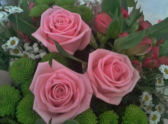 Roses de rétablissement