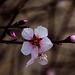 20140304 0473VRAw [TR] Baum, Kappadokien