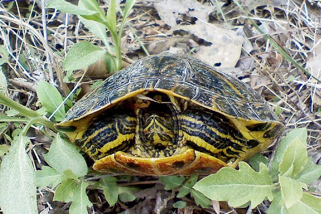 Turtle Road Rescue