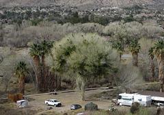 Morongo Canyon Preserve (4778)