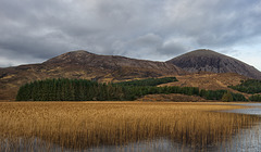 Reed beds and mountains