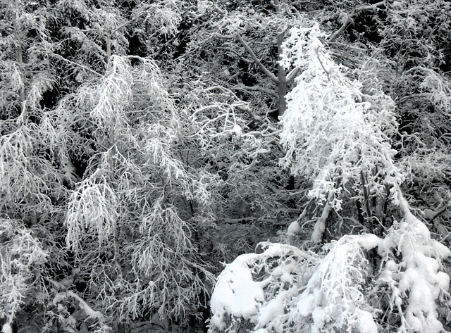 frostscape