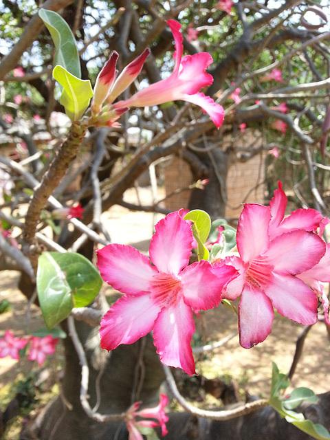 Seasonal plants are relative...