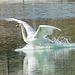 Landung auf dem See