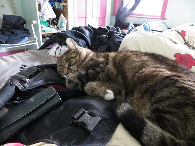 Wash sleeping on my bag