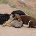20140304 0395VRAw [TR] Hundewelpen, Kappadokien, Skulpturental, Türkei