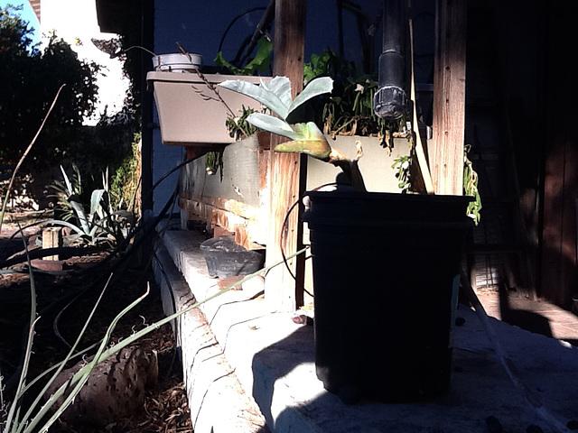 Backyard Shadows