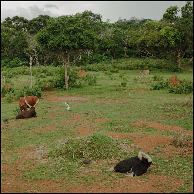 Mixed wildlife enclosures