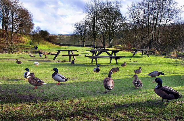 Wycoller.....land of ducks.