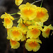 Orchids 40