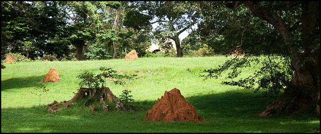 Termites!