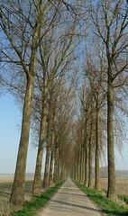 Nederland - Zeeland, Hedwigepolder