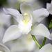 Orchids 44