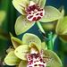 Orchids 45