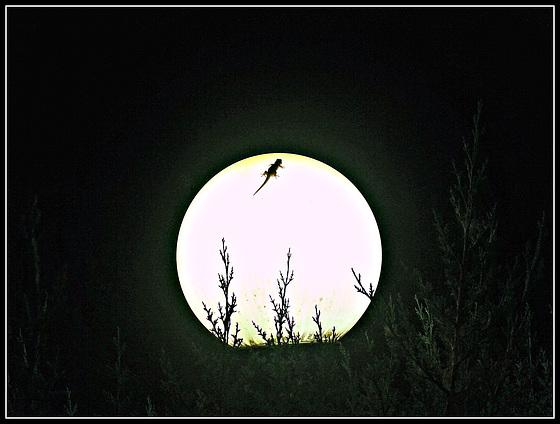 El dragón y la luna.