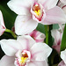 Orchids 46