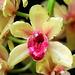 Orchids 55