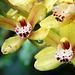 Orchids 56