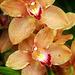 Orchids 57