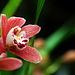 Orchids 58