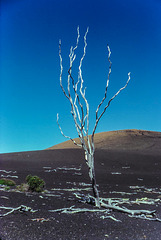 Devastation Trail - Mauna Loa, Hawaii, Dec. 1980