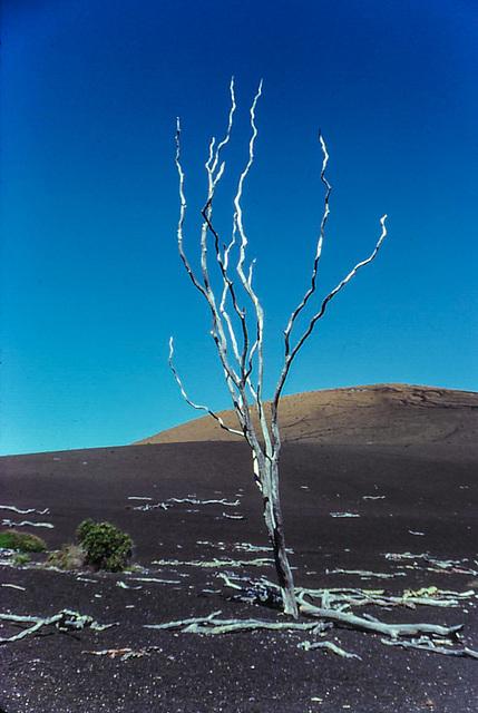 Devastation Trail - Mauna Loa, Hawaii, Dec. 1980